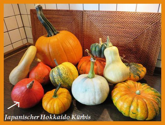 Japanischer Hokkaido Kürbis