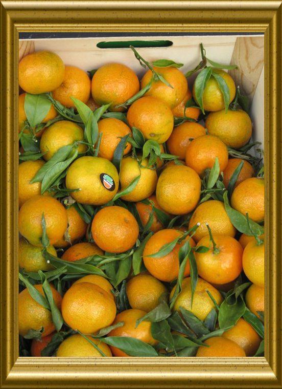 Mandarinen aus der Taraland Lehrküche
