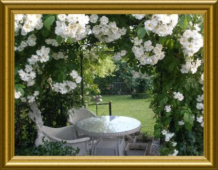 Rosenblüte auf Taraland