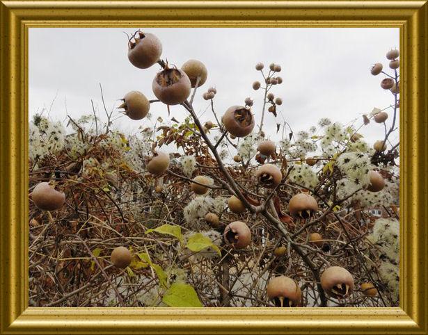 Mispeln auf Taraland