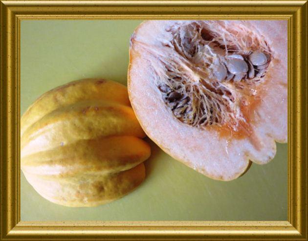 Puffer aus Kartoffeln und Kürbis Marina di Chioggia aus der Taraland Lehrküche
